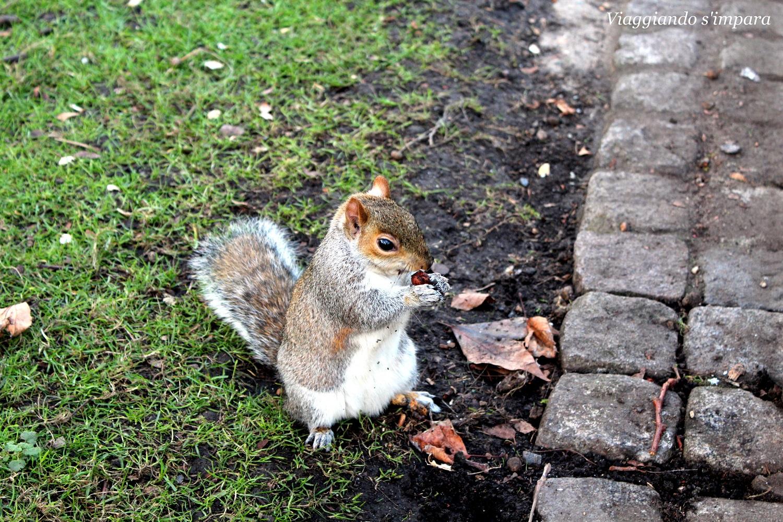 scoiattoli a St. James Park