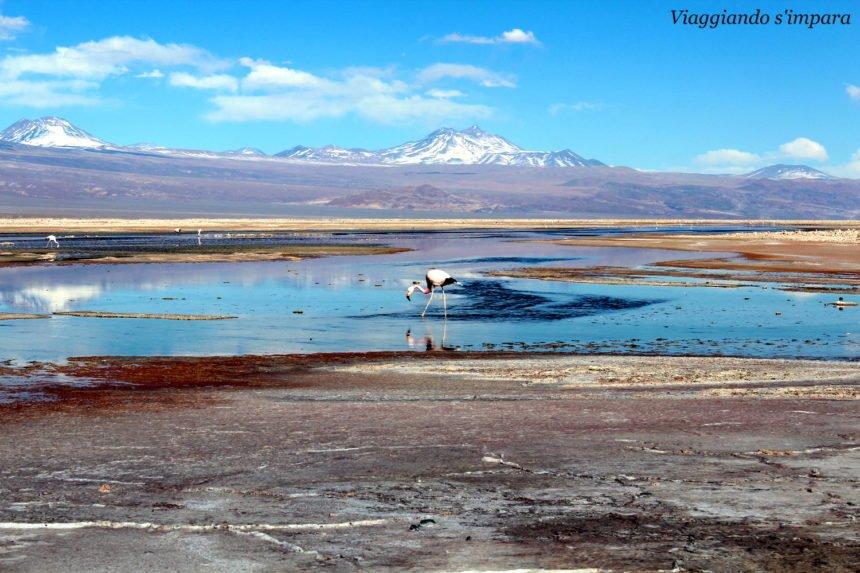 Fenicotteri alla Laguna Chaxa