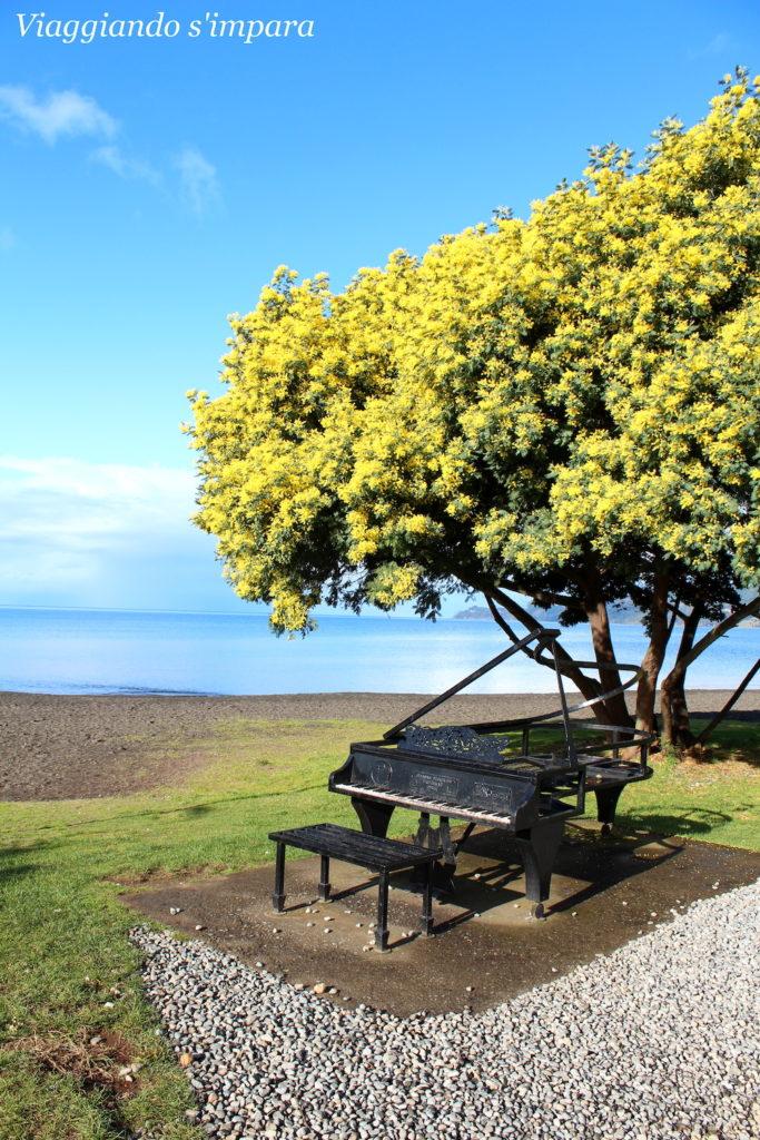 Mimose di Frutillar